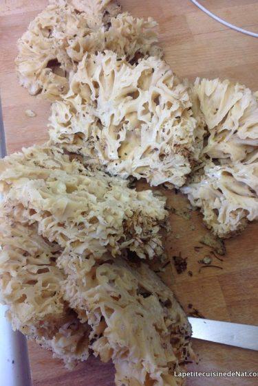 sparassis crépu ou morille blanche