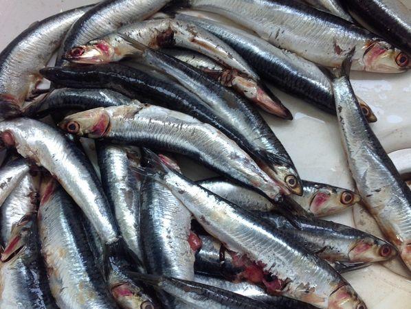 anchois frais marinés à l'huile d'olive