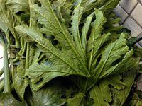 chaussons de feuilles de courgette et brousse